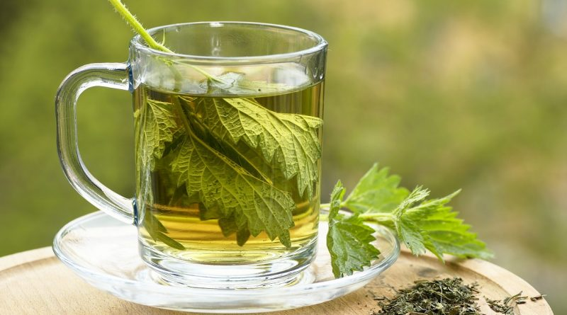 Herbata z pokrzywy – zastosowanie i porady odnośnie parzenia