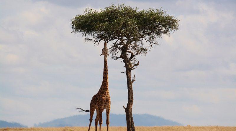 Kenia safari – wspomnienia na całe życie.