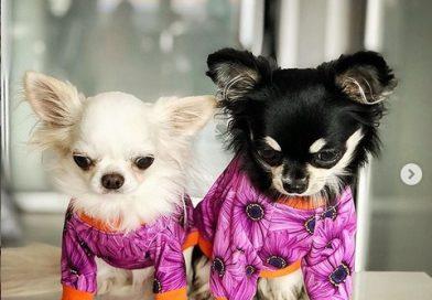 Psia moda – w co ubrać psa?