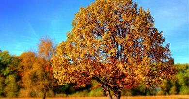 Jesienna pielęgnacja skóry: Zalecane kroki